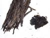 Papua New Guinea Planifolia