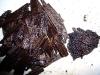 Beanilla PNG Tahitensis