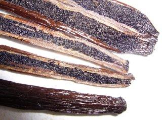 TopVanilla.com Madagascar Planifolia