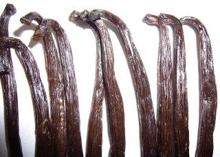 Vanilla Gold Madagascar 18cm