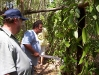 George and UWS prof look at vanilla vines
