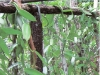 Vanilla vines on trellis