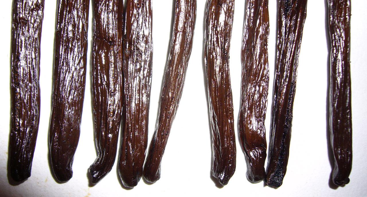 how to grow vanilla beans nz