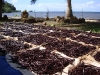 Vanilla drying at Raiatea plantation
