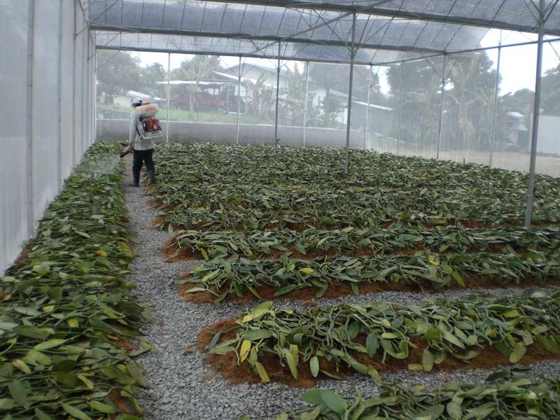 14+Vanilla Cultivation In Greenhouse Pdf