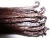Vanilla Gold Madagascar 17cm