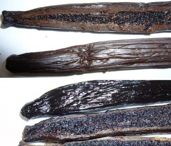 Single source boutique vanilla (top) and third world vanilla from a curing house (bottom).